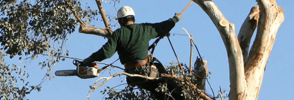Armer Tree Care in Bothell, WA banner image