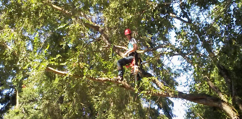 Tree service experts at Armer Tree Care in Bothell, Washington - tree removal services near me - tree service companies near me