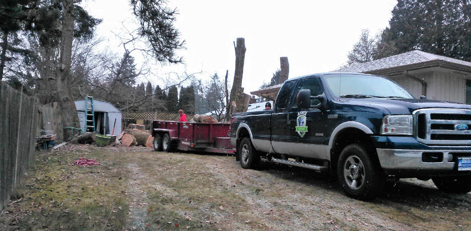 Stump grinding - tree stump removal - Armer Tree Care - tree service company - tree removal company in Snohomish County - remove my trees