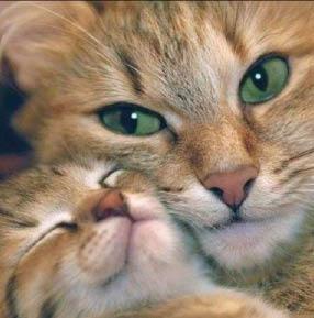 Pet care, cat care