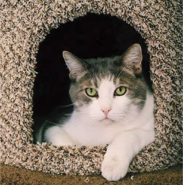 Cat care, emergency vet