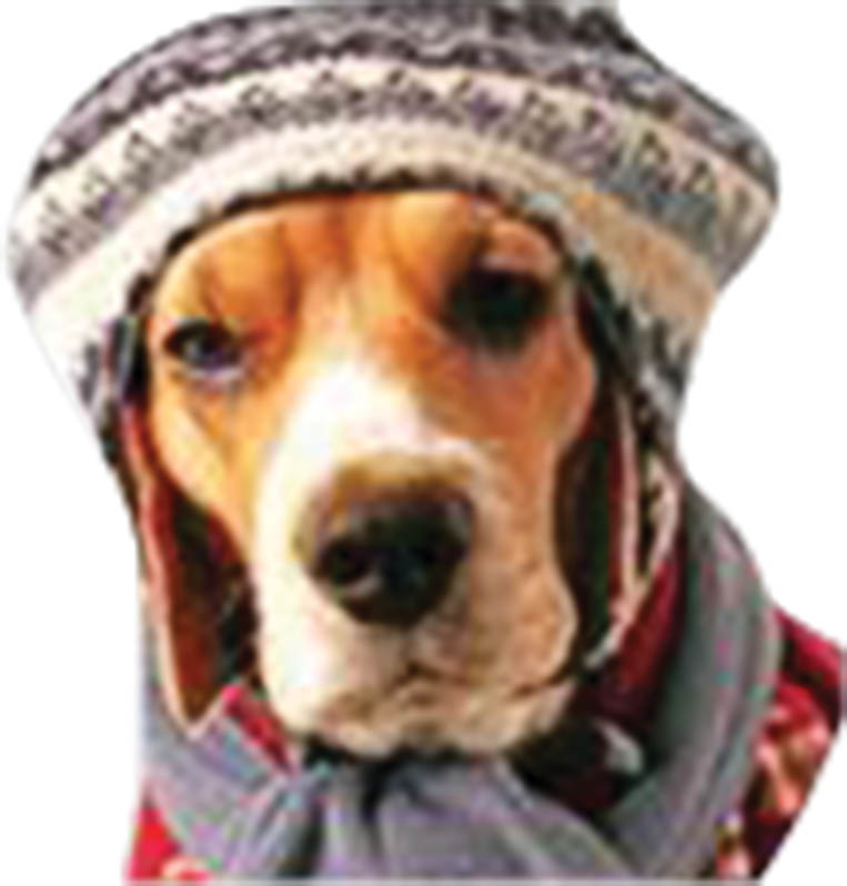 photo of dog in a hat representing A to Z Total Heating & Cooling in Dearborn Heights, MI