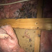 Attic-Insulation-Clean-Up