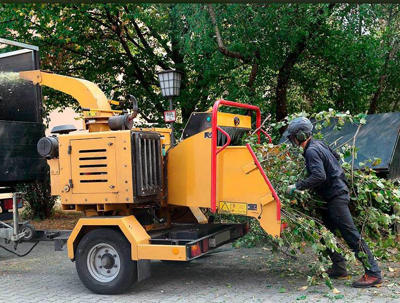 Get tree trimming and tree removal in West Lake Hills