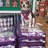 Best dog food at Bentley's Pet Stuff in Pooler, Savannah & Whitemarsh GA
