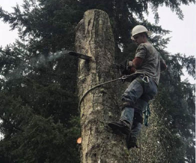 BK Tree Service - professional tree service in Olympia, WA - tree removal - hazardous tree removal