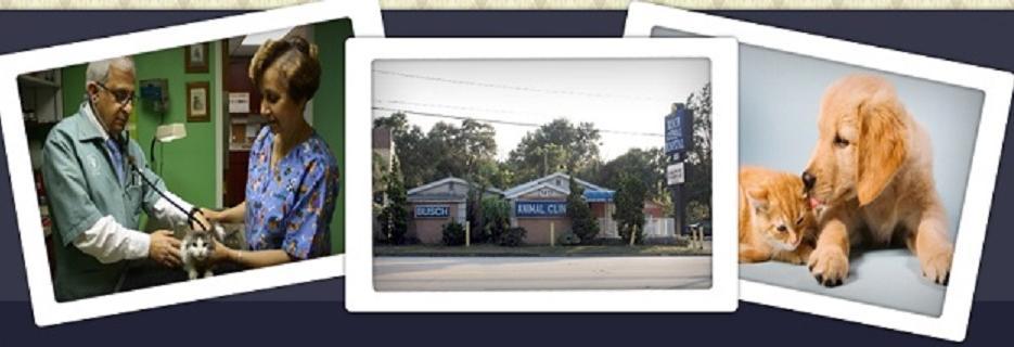 BUSCH ANIMAL HOSPITAL BANNER, TAMPA, FL