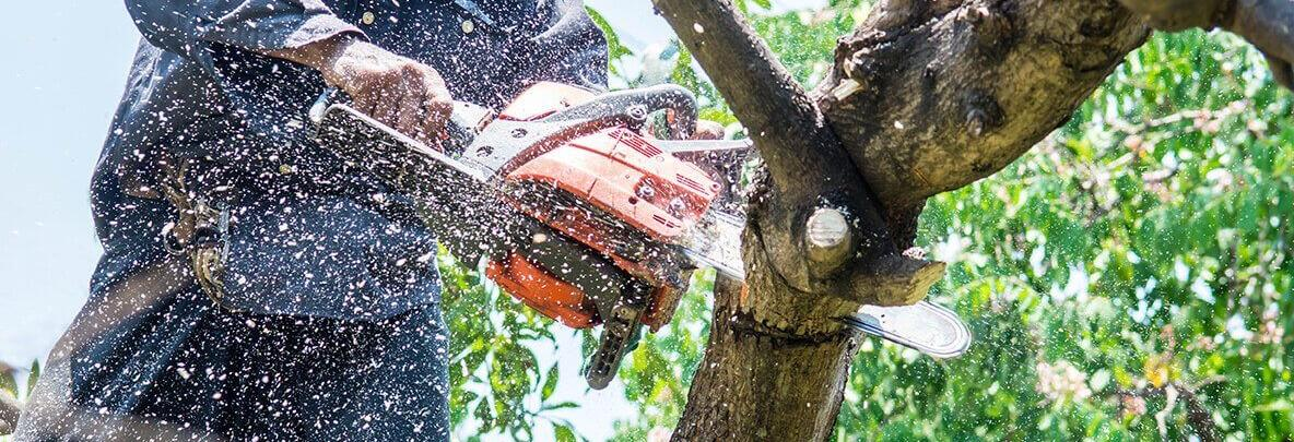 I'm In Tree Services in Tacoma, WA banner image