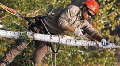 See Bay Area Tree Specialists for tree cutting, vista pruning and precarious tree removal