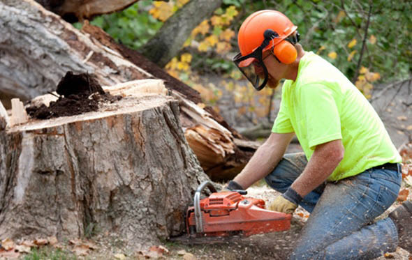 Professional Stump Grinding & Removal Services at Bay Area Tree Specialists