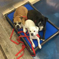Training, Daycare, Boarding, Grooming and More!