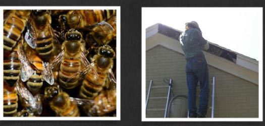 Apex Wildlife Control will remove bees under your eaves