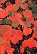 Behmerwald nursery,flowers,plants,garden,discounted flowers,nursery near me,flowers in pa
