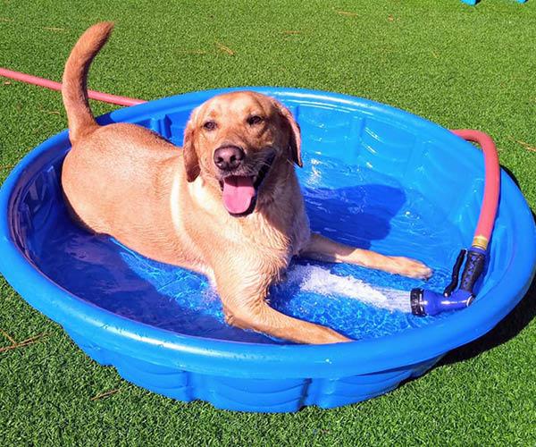 outdoor dog bathing