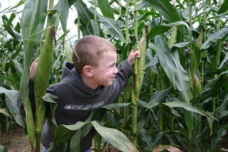 Corn Maze, Mini Maze, Hayrides, Petting Zoo, Pedal Cart Track, Play Area, Giant Inflatable, Magic Show, Wagon-Driven Farm Tours, judge the Pumpkin Contest, Adult Eating Contest, and Prizes & Giveaways.