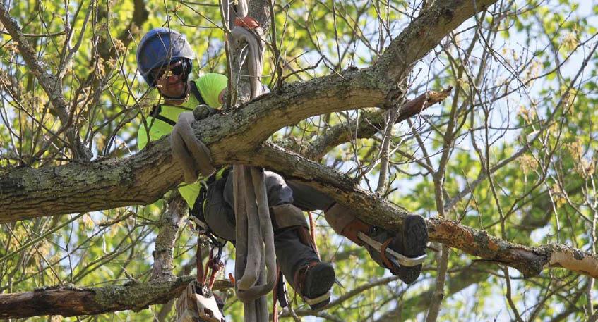 Tree removal,tree care,brandywine tree and shrub,down trees,tree company,shrub work,