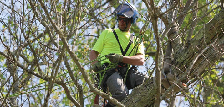 tree removal,tree pruning,tree care,stump removal,discounts,tree care near me,tree removal near me,