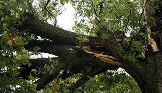 broken tree, struck by lightning, tree in half