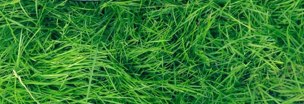 lawn mowing in dallas, TX