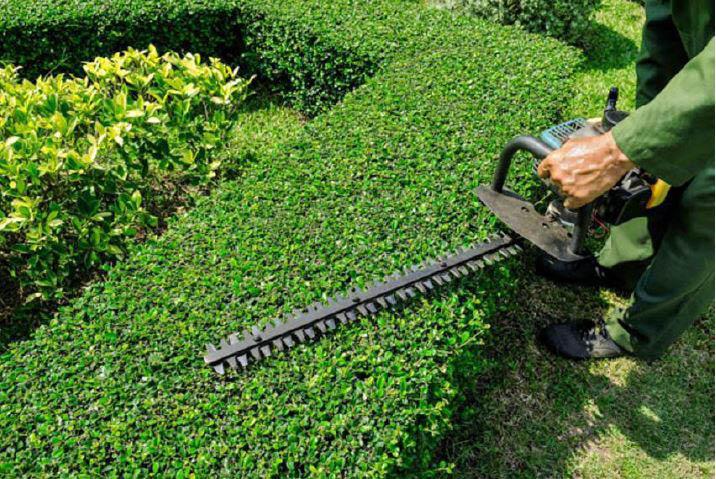 lawn services in Dallas, TX