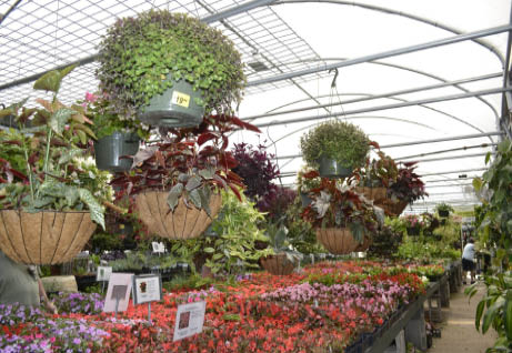 brumley-gardens-dallas-tx-variety