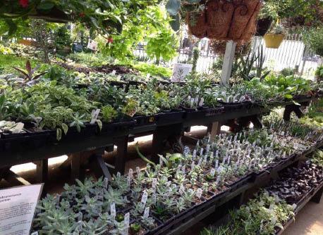 brumley-gardens-dallas-tx-farm