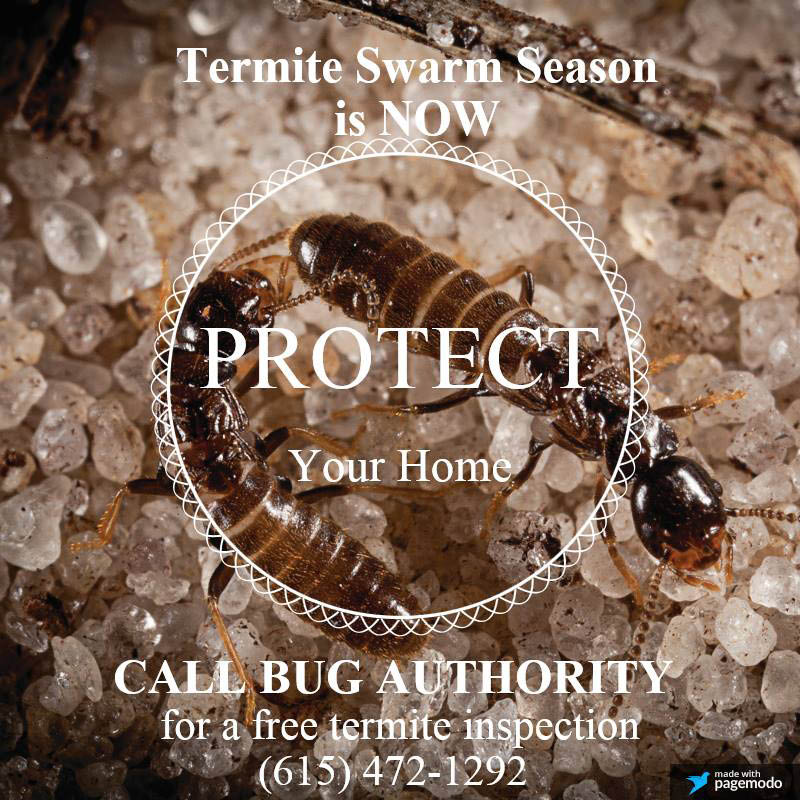 Contact us today for termite treatment in Nashville