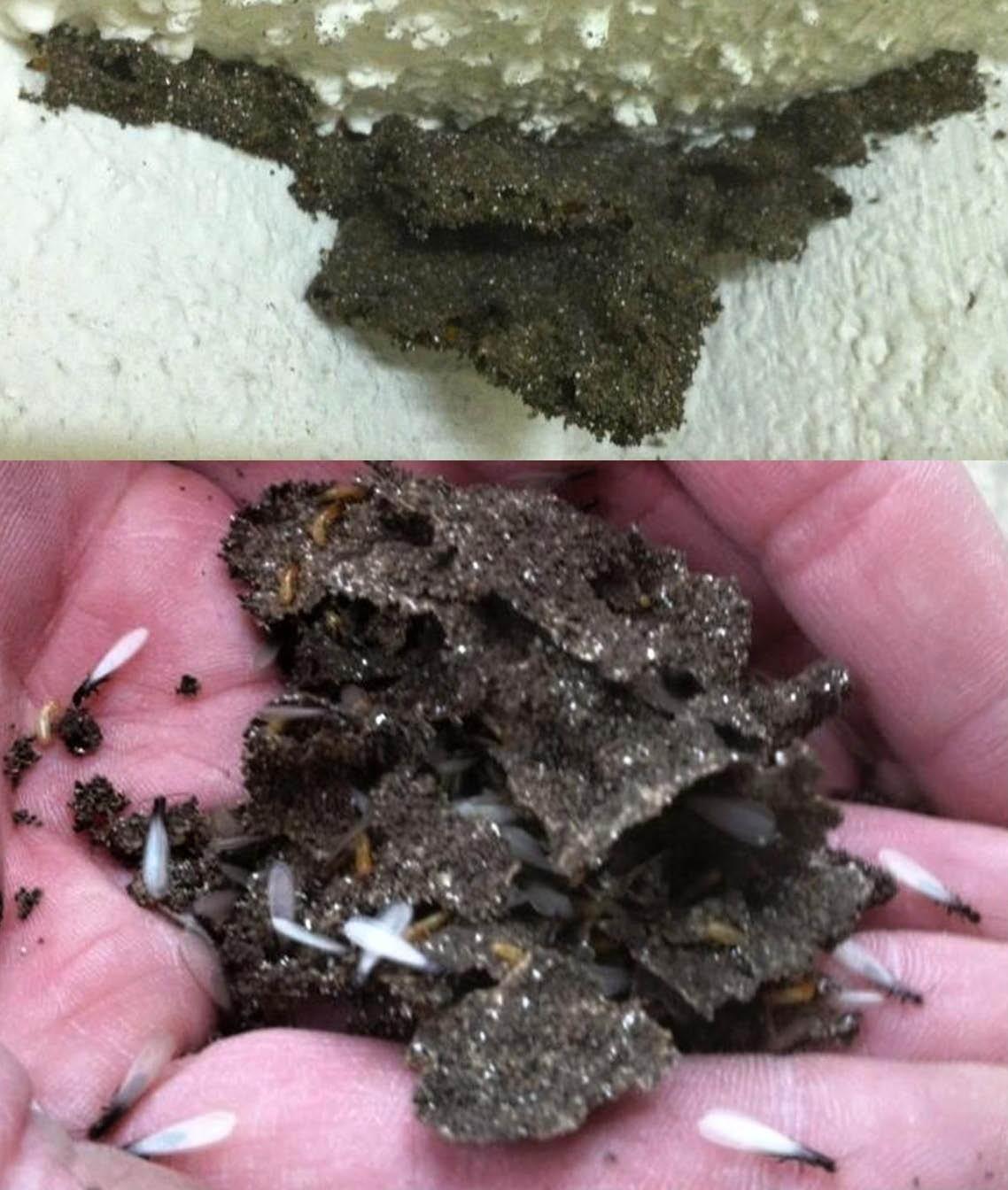 termite classic pest control in azle, tx