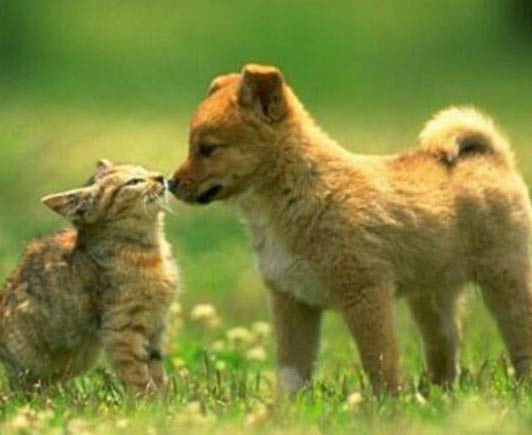 Full Service pet care including dental checkups and vaccines for large and small animals as well as rodents and birds.