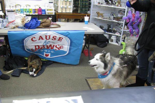Captivating Canines adoption event