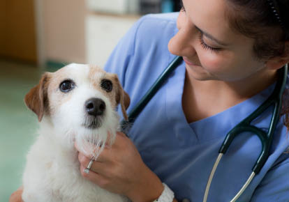 Care for dogs and cats - Cedar Plaza Veterinary Clinic - veterinarians in Mountlake Terrace, WA - vet clinic - pet care - pet hospital - veterinarian coupons near me