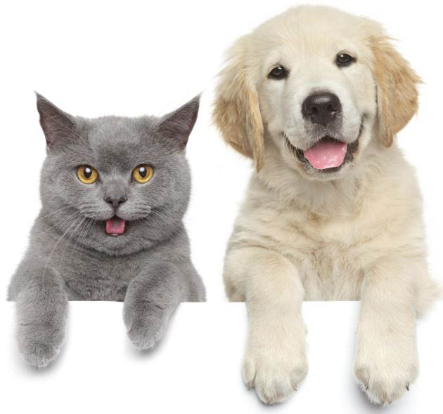 Quality veterinary care for dogs cats and other animals at Cedar Plaza Vet in Mountlake Terrace, WA - veterinarians near me - vet clinics near me