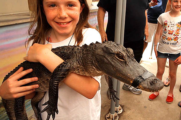Young girl gets up close and personal with alligator at Everglades Park