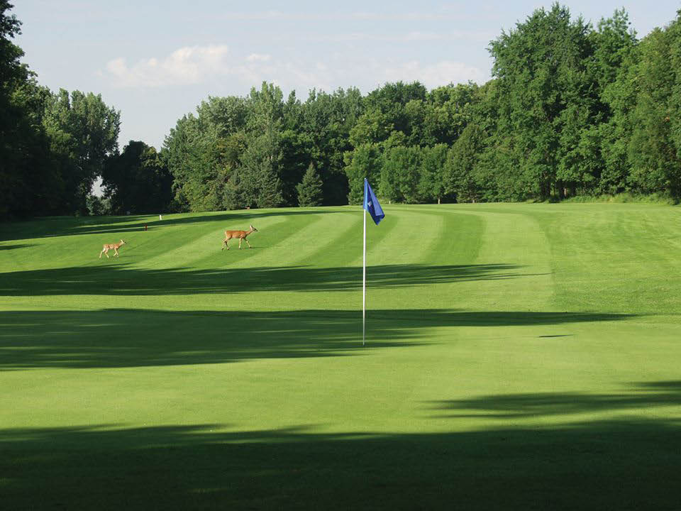 golf course near Maple Grove, MN