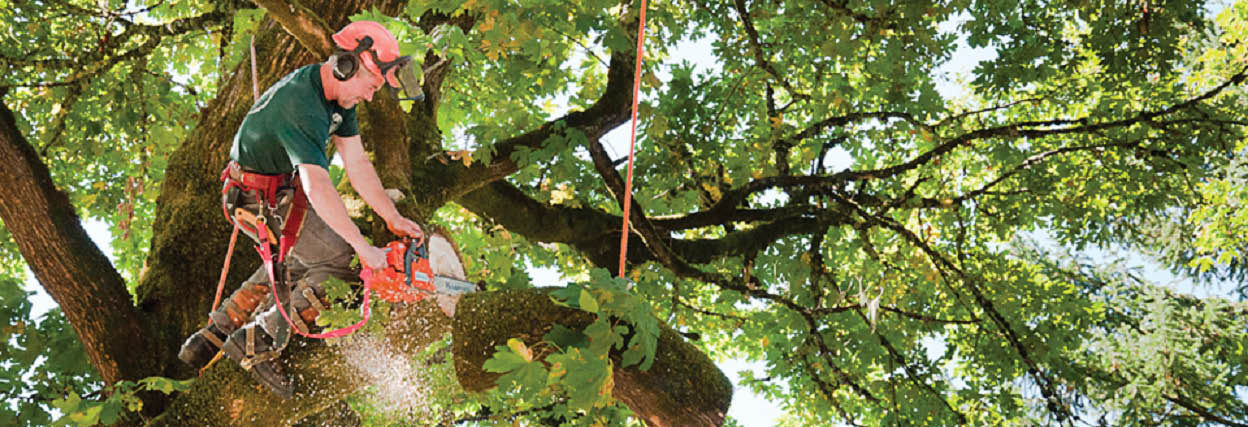 DC Tree Service main banner image - Chehalis, WA - tree service