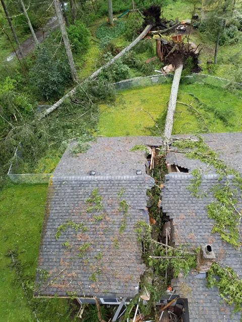 Tree damage - professional tree removal - tree service - DC Tree - Chehalis, Washington