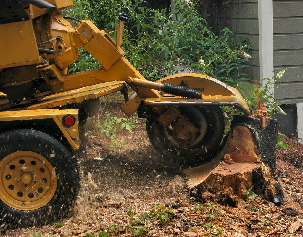 DC Tree - stump grinding - tree service - Chehalis, Washington