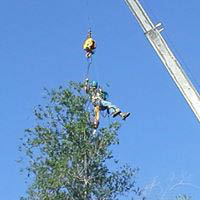 DSI Tree Service, Tree removal, Tree trimming, Stump grinding