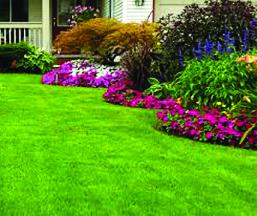 Lawn-Maintenace-&-Landscaping