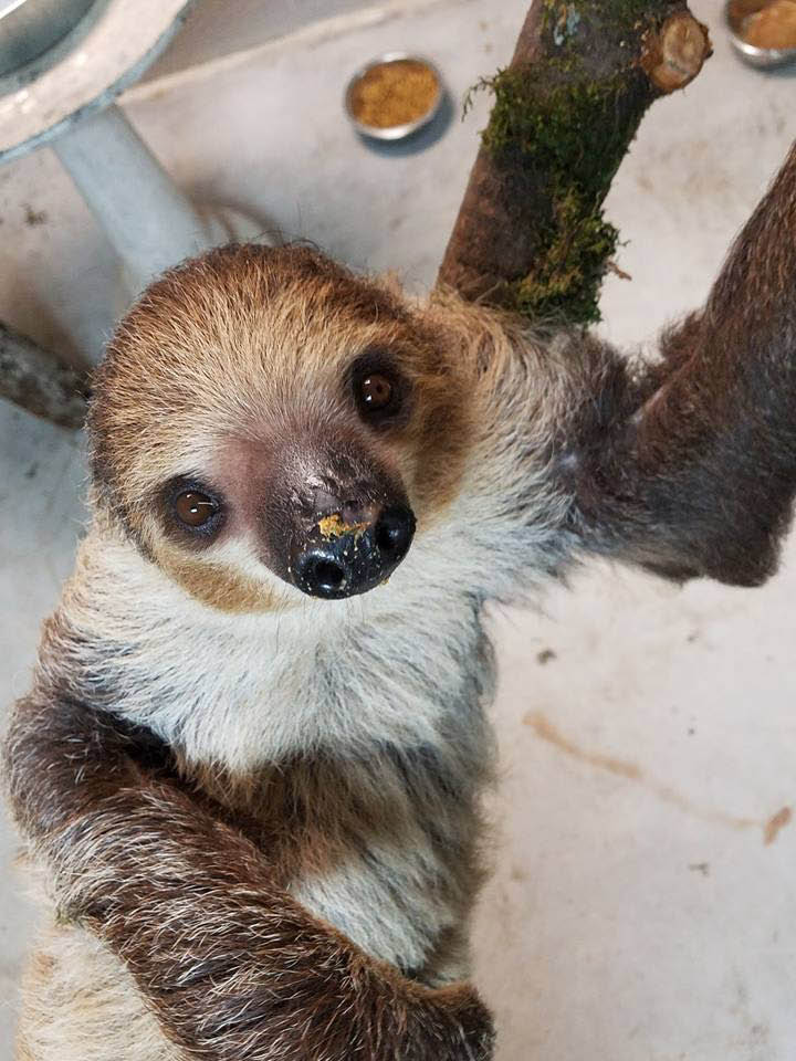 Debbie Dolittle's Petting Zoo in Tacoma, Washington - see cute sloths - indoor petting zoo in Tacoma - petting zoos near me