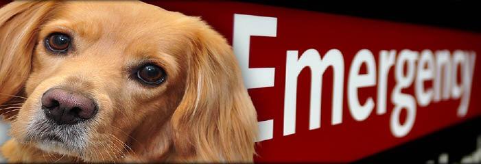 Denver Animal Emergency in Denver, NC banner