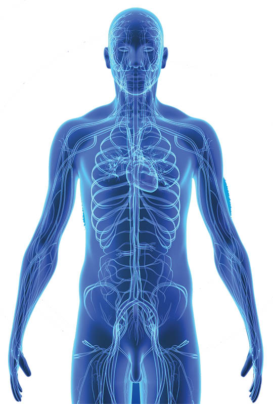 Picture of skeletal system for Detox Day Spa in Orion Twp, MI