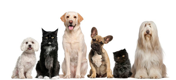 Picture of dogs at Canine Divine Dog Grooming in Sterling Heights