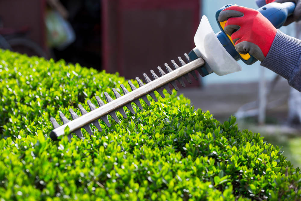 Dove Landscaping - Lakewood, WA - hedge trimming - hedge pruning - professional landscapers near me - professional landscaping services near me - lawn care services near me - landscaping coupons near me.