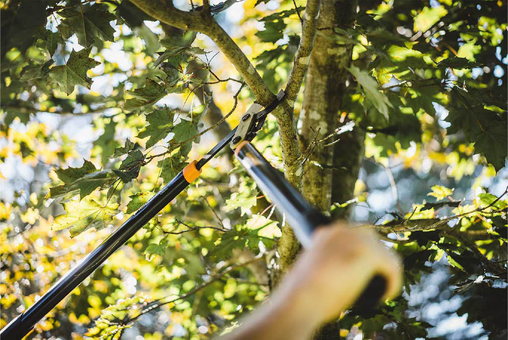 Tree trimming by Dove Landscaping - tree pruning by Dove Landscaping - general lawn maintenance - professional landscapers near me - professional landscaping services near me - landscaping coupons near me