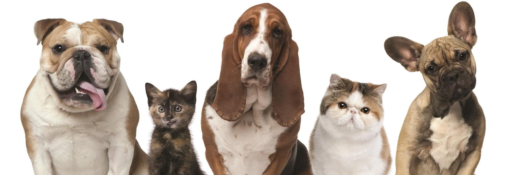 save money on pet care with Dr. Kathy
