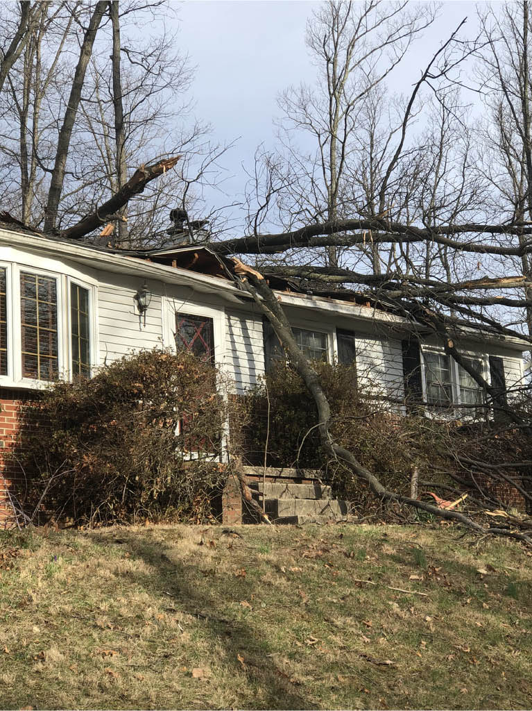 Dunn Rite tree removal with safety equipment