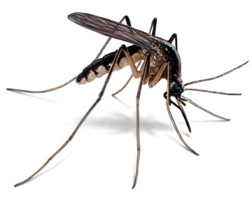 Mosquitoes, Termites, Bed Bugs, Carpenter Ants, Middletown, Red Bank
