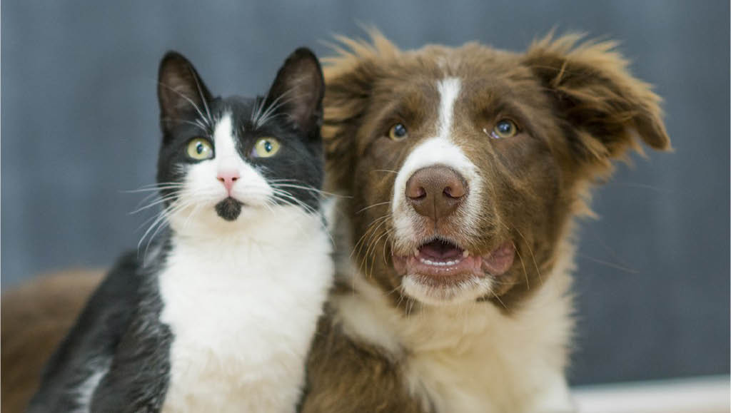 Your local neighborhood pet nutrition center - certified pet dietician & pet nutrition specialists - Earthwise Pet Nutrition & Wellness Spa in Woodinville, Washington