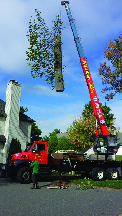 Tree Removal from Elite Tree Services in Kenvil NJ
